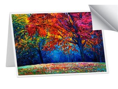 MUSEO MAX250 ARTIST CARD
